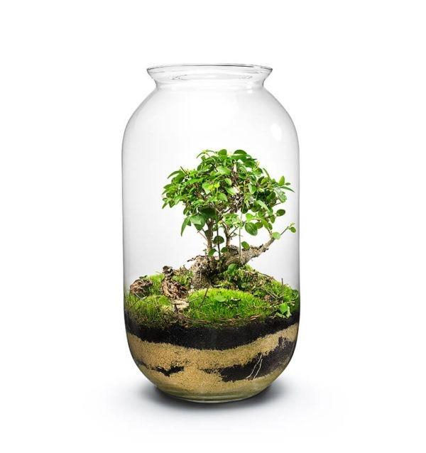 Owalny Ogród W Słoiku Gaia Bonsai